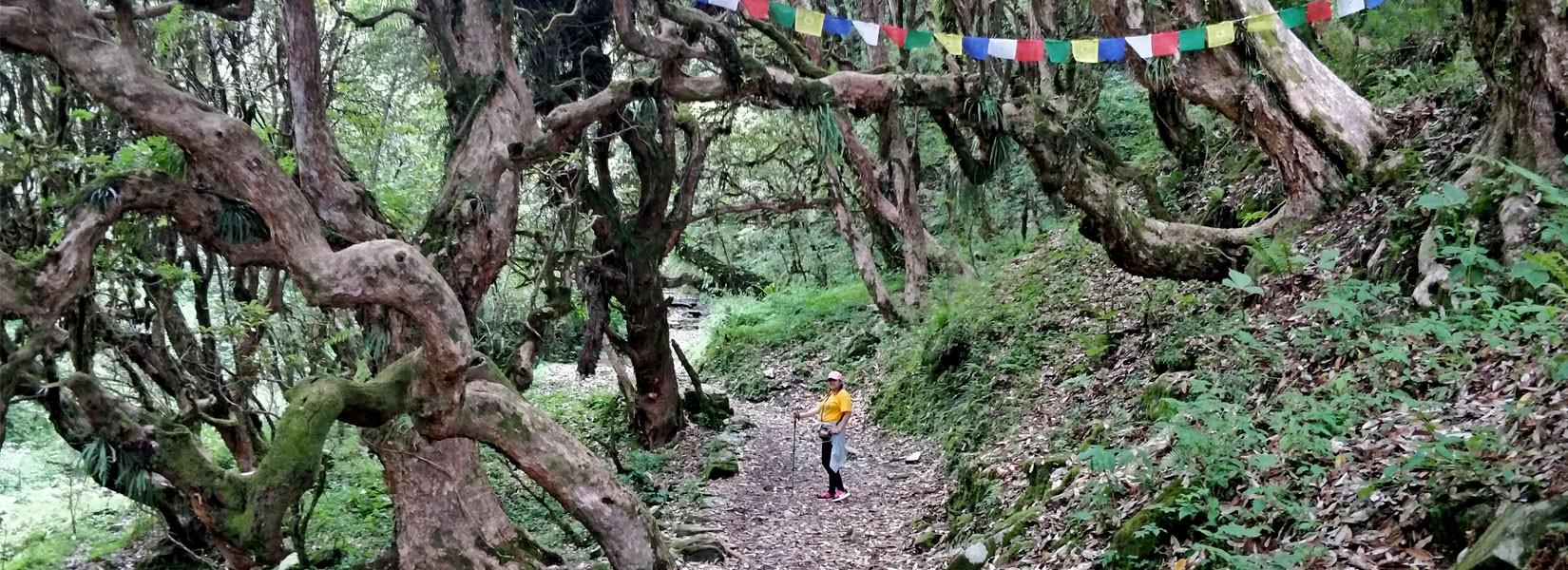 Annapurna Base Camp Trek Solo